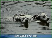 http//img-fotki.yandex.ru/get/135076/170664692.59/0_159569_a2d28ce4_orig.png