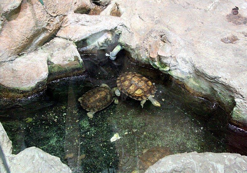 Vienna. Haus des Meeres (Aqua Terra Zoo)