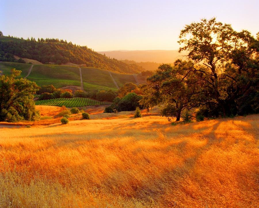 7. Округ Сонома, Калифорния, США