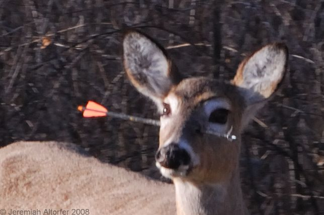 Какой-то робин гуд запустил свою стрелу и угодил прямо в голову оленю. Видимо, жизненно важные орган