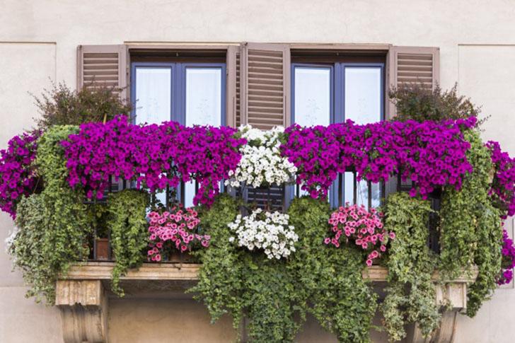 Вьющиеся растения Если вы хотите, чтобы балкон выглядел красиво не только изнутри, но и снаружи, луч