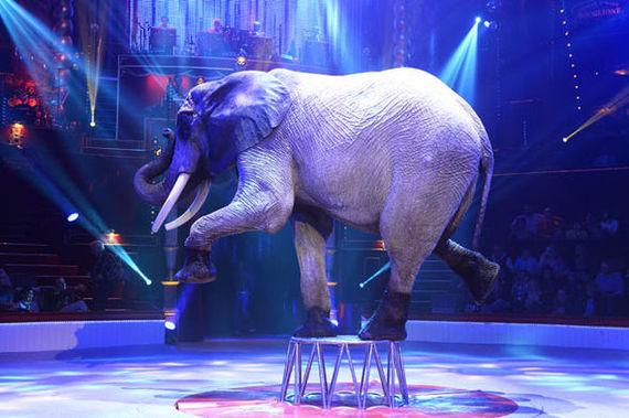 Использование животных в цирках и зоопарках запретят на международном уровне