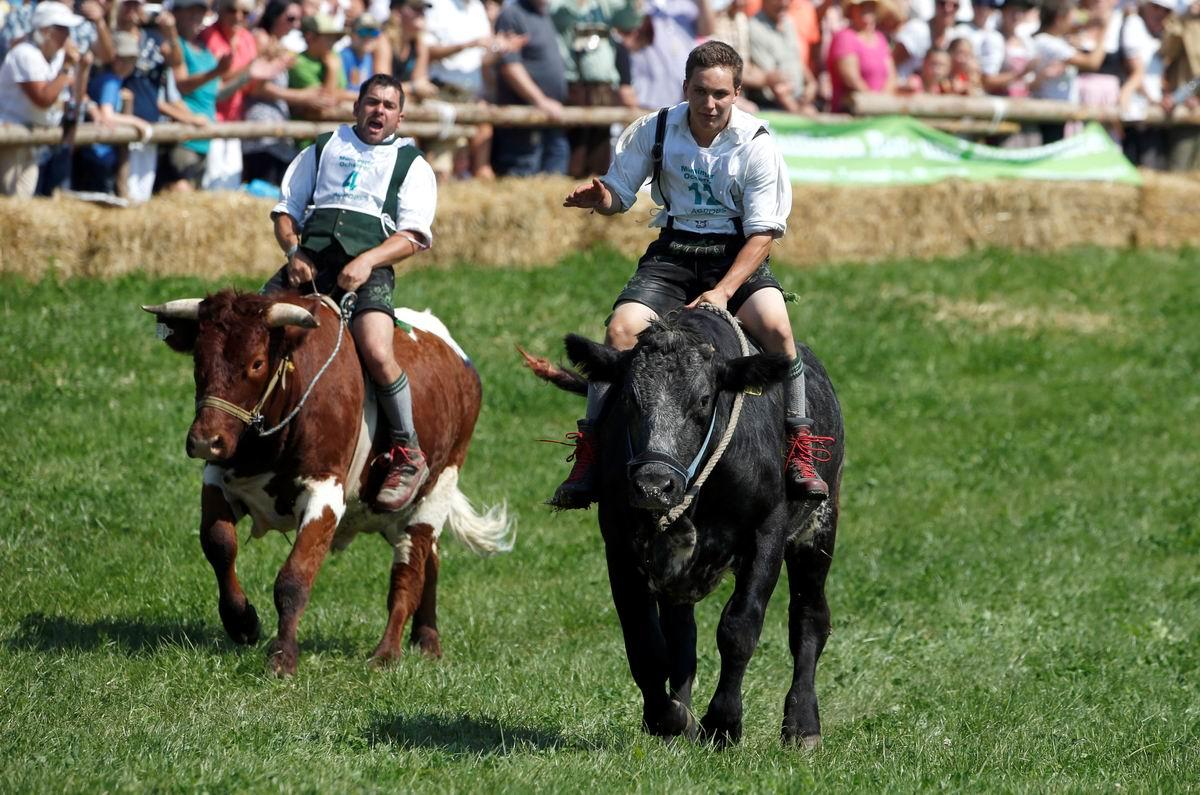 Скачки на быках: Баварские ковбои