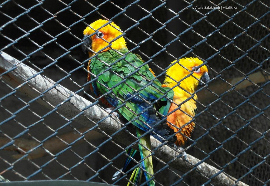 Попугаи в зоопарке Шымкента