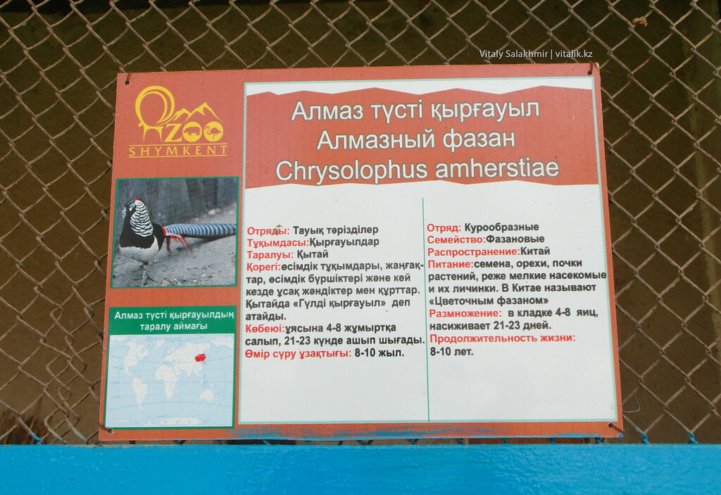 Алмазный фазан, табличка на клетке, зоопарк Шымкента