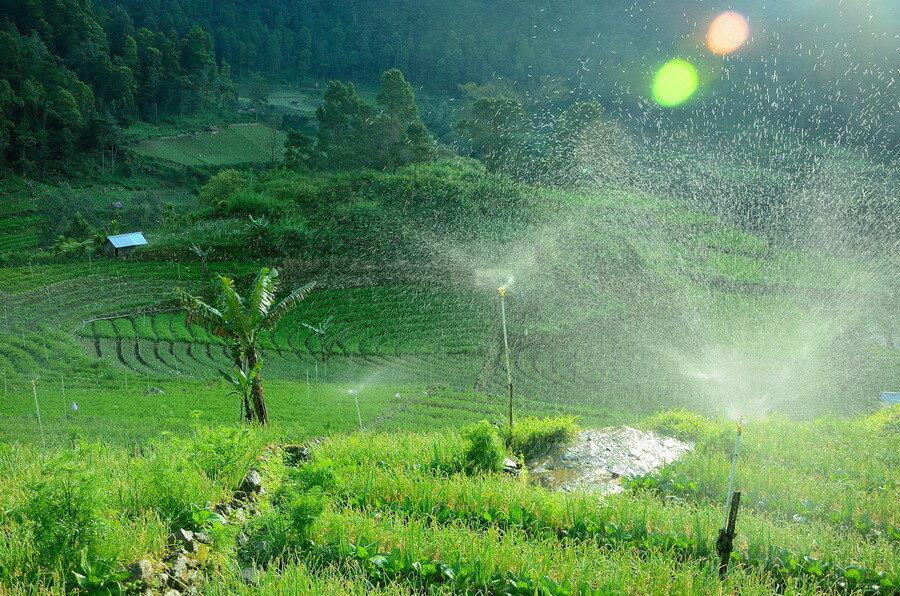 Грядки Озеро Саранган (danau sarangan) рядом с вулканом Лаву на Восточной Яве Озеро Саранган (Danau Sarangan) рядом с вулканом Лаву на Восточной Яве 0 1b11d8 ad1011f1 XXL