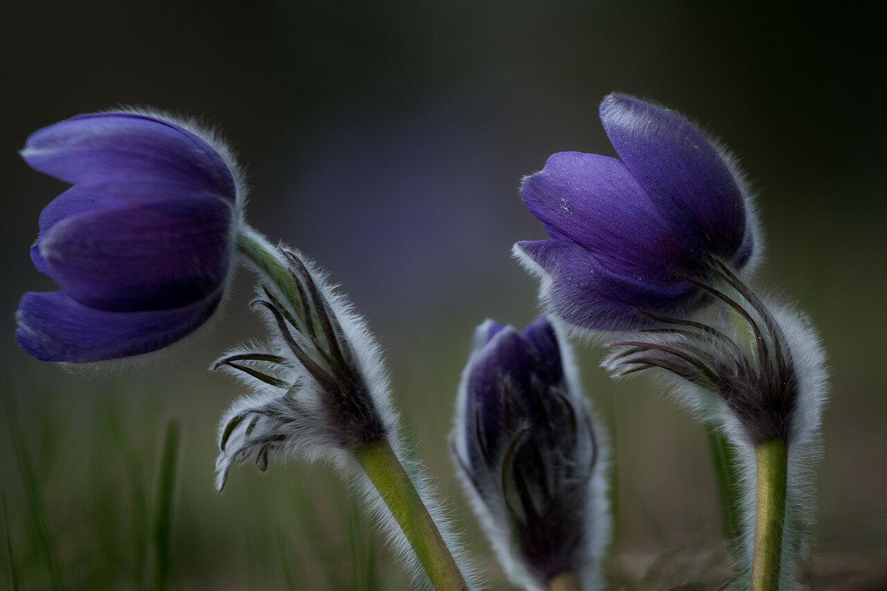 Сон цветок сказка