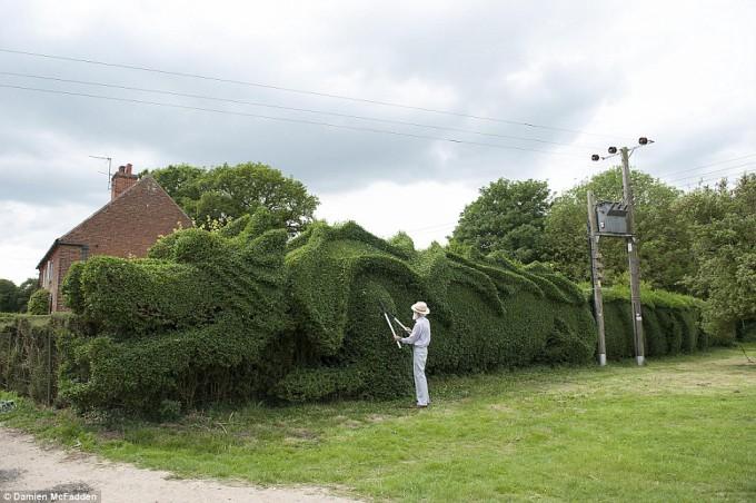Британец 10 лет растил изгородь в форме дракона