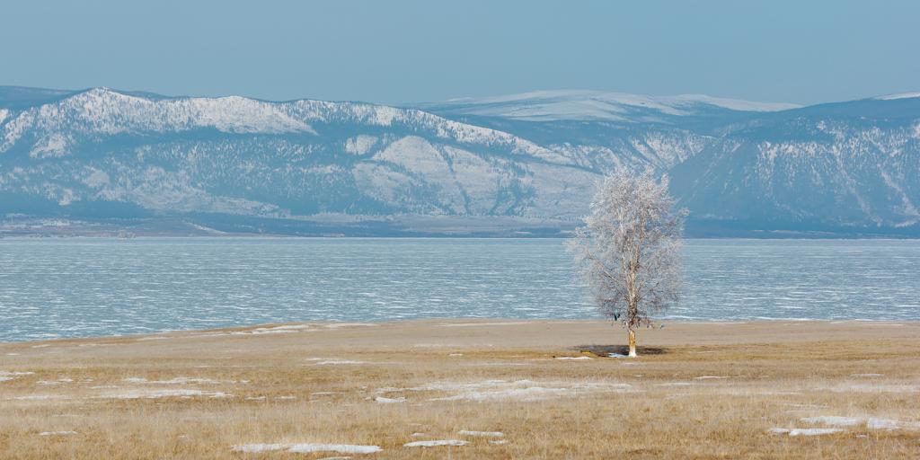 В южной части острова — степь, с редко стоящими одинокими деревьями. После морозной ночи все они был