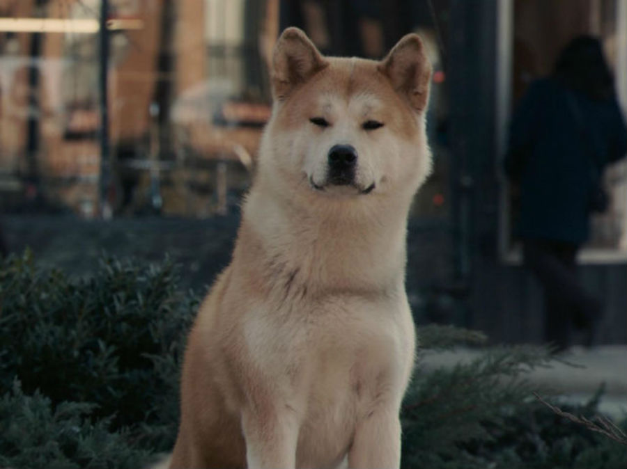 Хатико в фильме «Хатико: Самый верный друг».