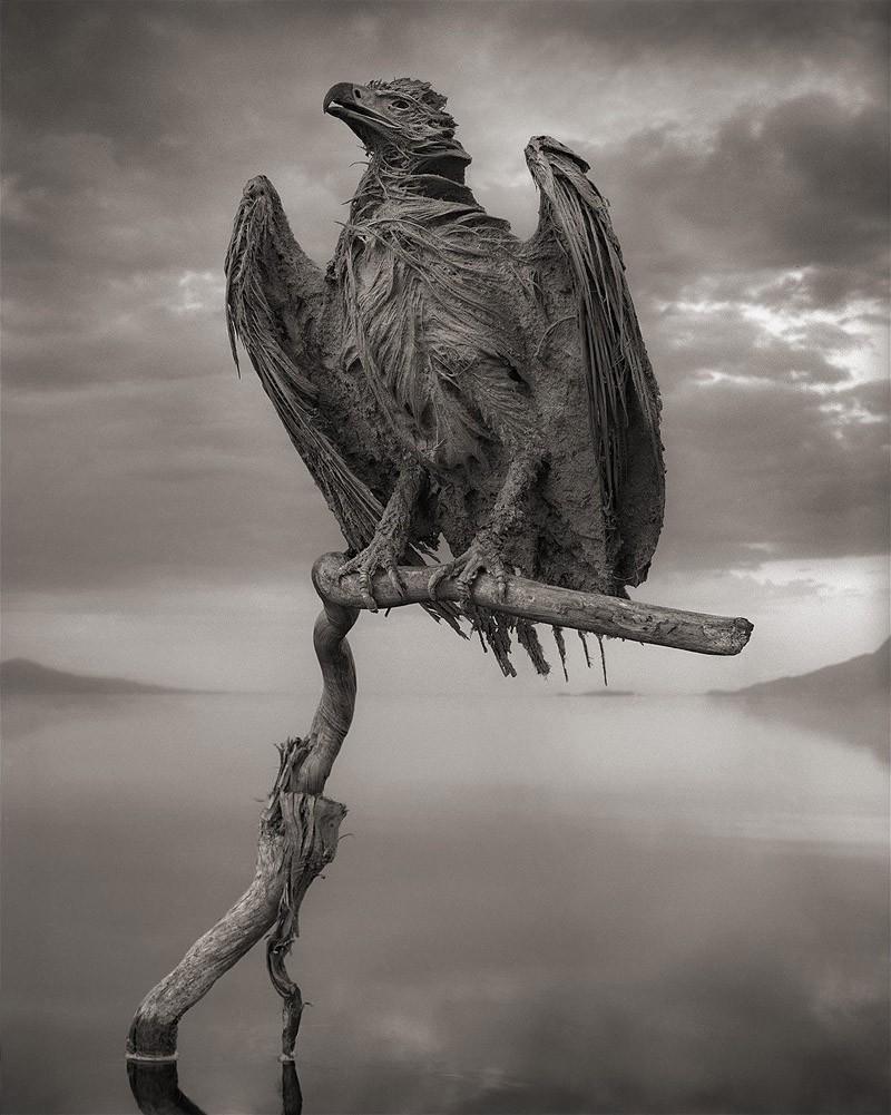 5. Впервые уникальную «способность» Натрона убивать животных и превращать их в статуи обнаружил фото