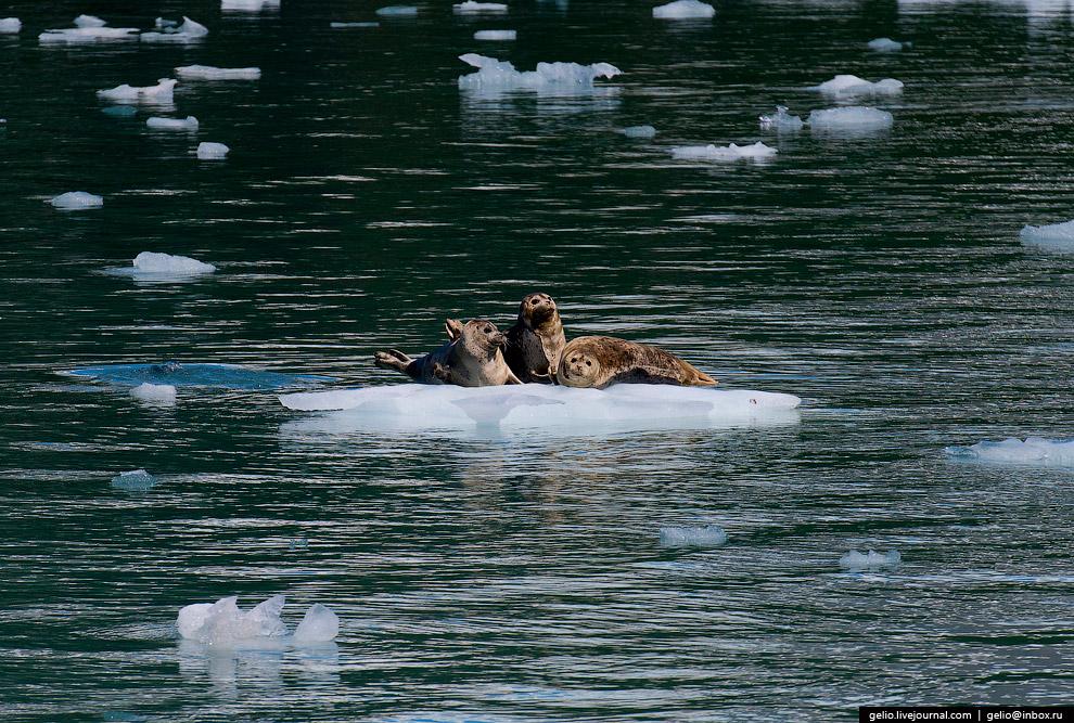 34. Здесь можно своими глазами увидеть, как от айсбергов откалываются и падают в море громадные