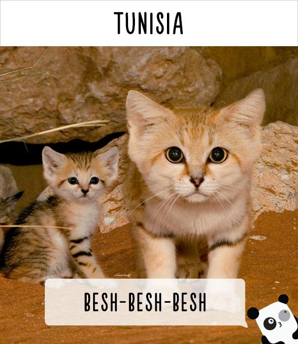 Тунис — беш-беш-беш.