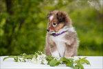 Puppy-Grazel-20.jpg