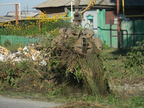корчуют клены в Нагорном