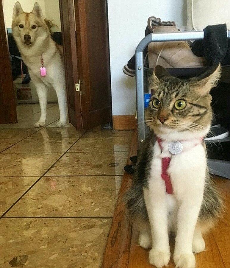Котег и собакен