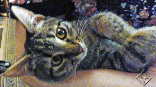 Морда котенка
