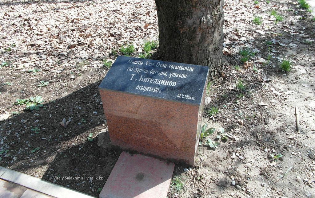 Дерево Бегельдинова в дендропарке Шымкента