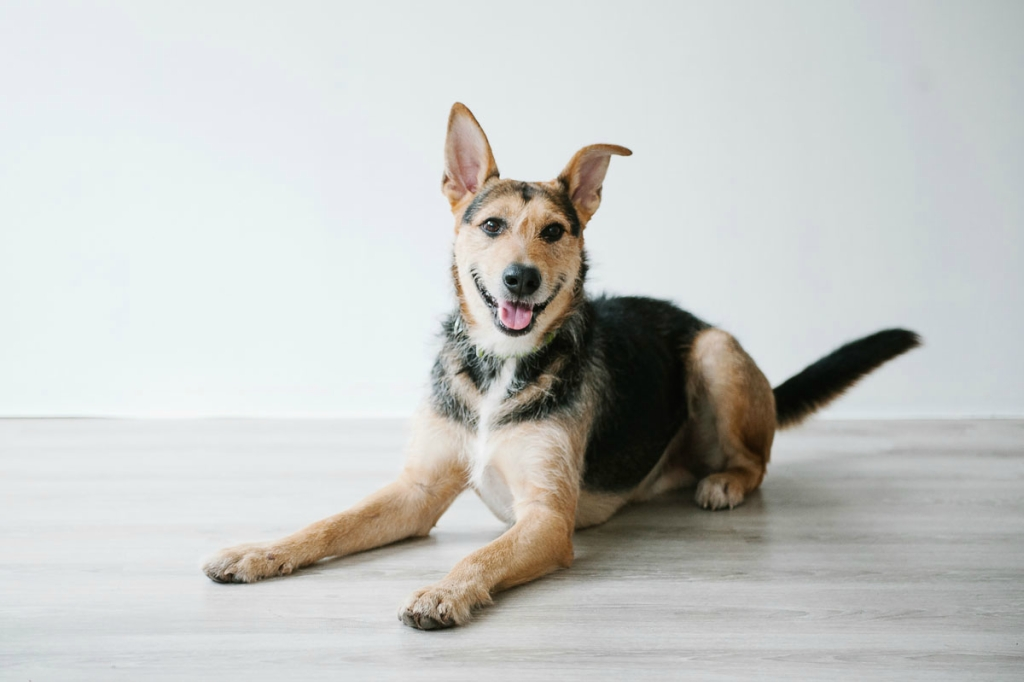 Шерлок собака из приюта догпорт