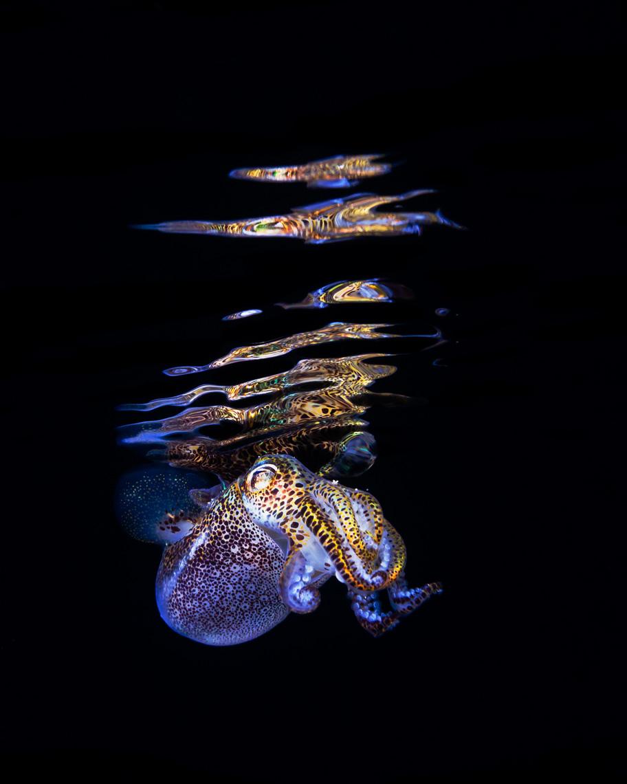 Подводные обитатели Тода Бретла (Todd Bretl)
