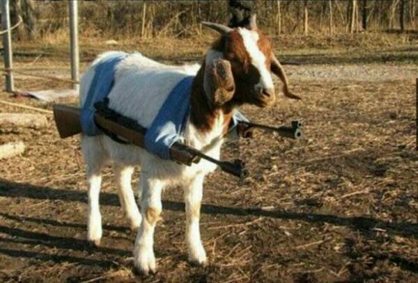 Забавные животные - 877