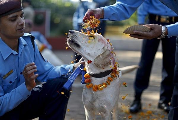 Как собаки связывают людей с духовным миром? Согласно индуистской традиции, собаки — посланники Ямар