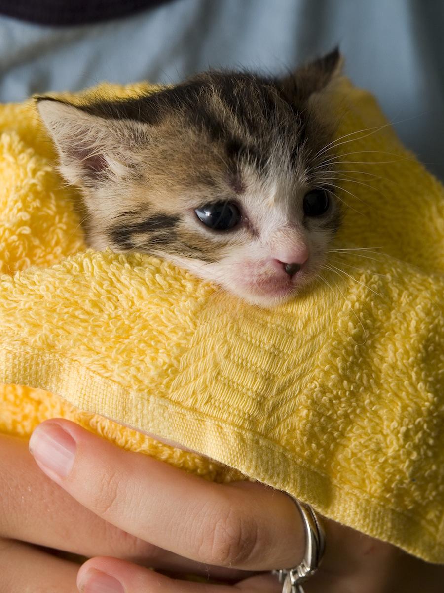 Избавиться от шерсти домашних животных на вашей одежде Если у вас есть домашние животные, то вам нав