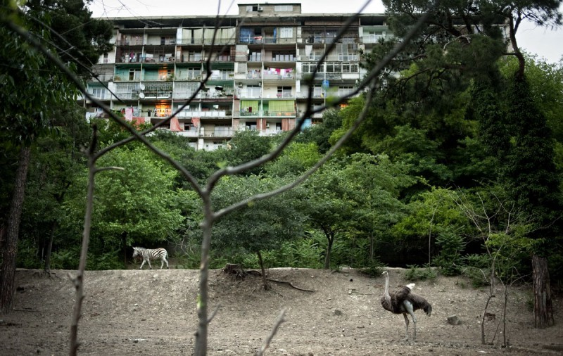Тбилисский зоопарк, Грузия.