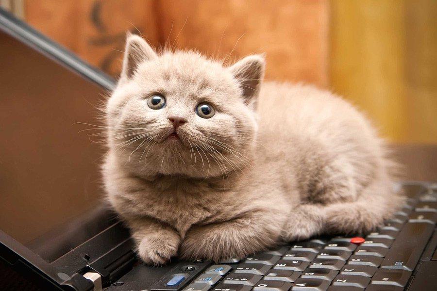 Ворганизмах кошек найдены опасные химикаты
