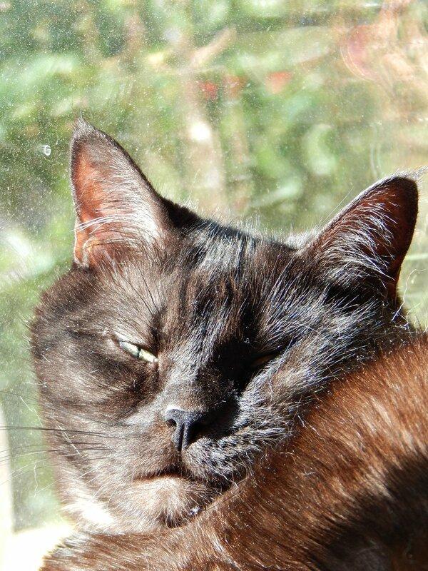 чёрный кот Муся охотится на муху | horoshogromko.ru