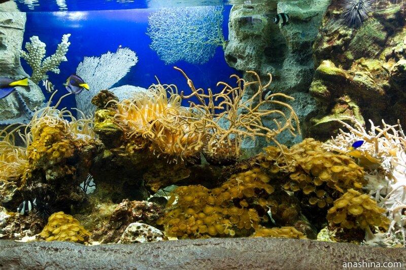 Обитатели кораллового рифа, Океанариум в парке Ривьера, Сочи