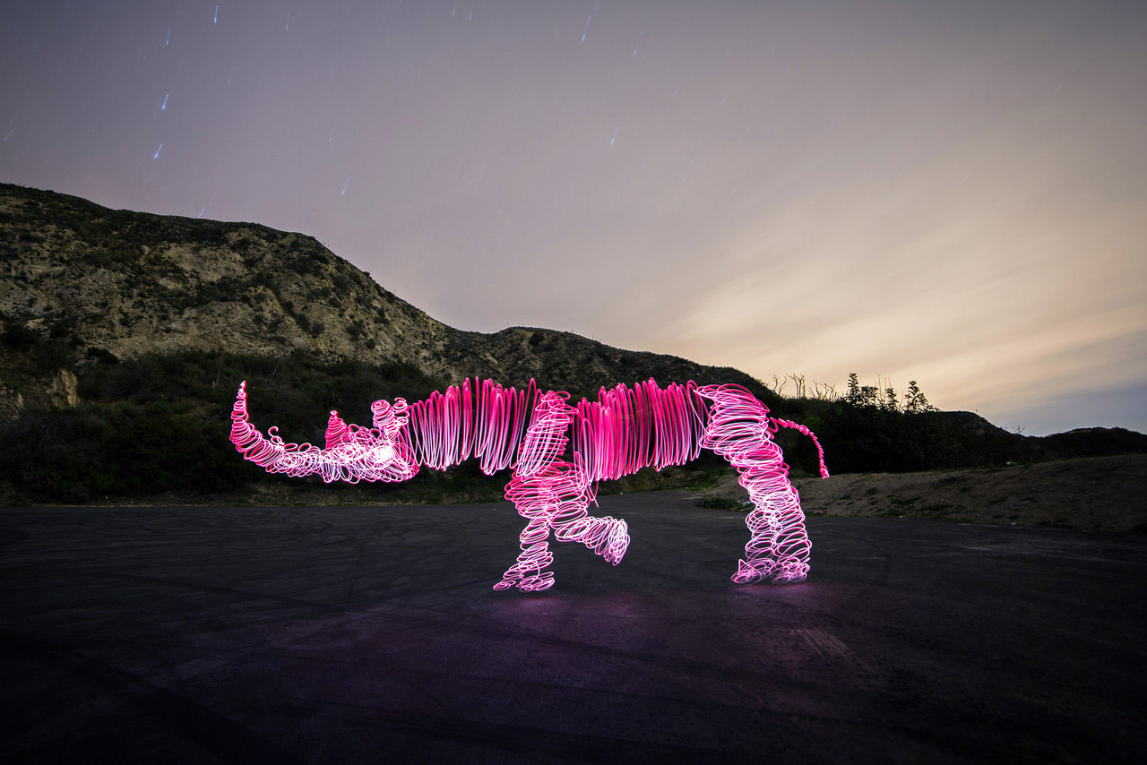 Animal Light Paintings by Darren Pearson