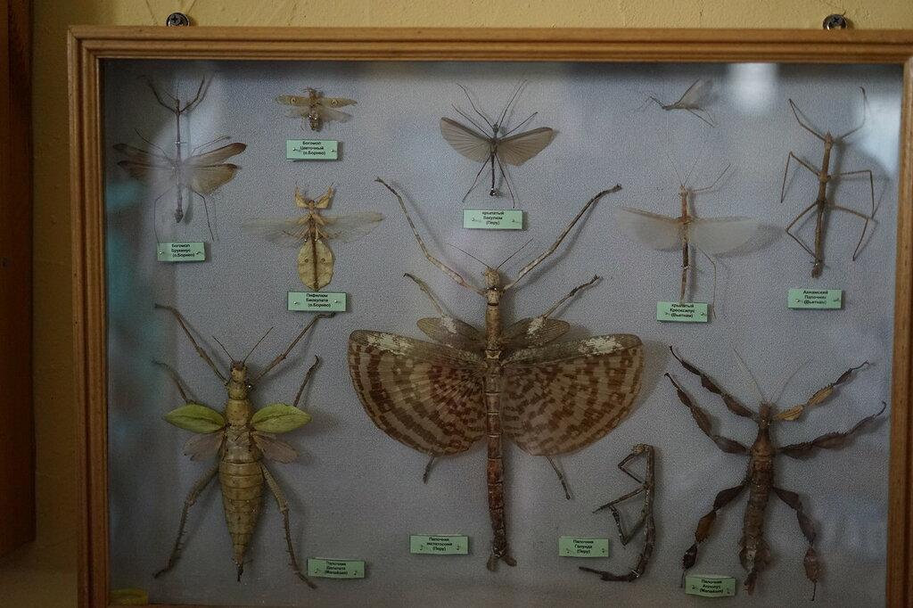 Выставка бабочек и насекомых. Сафари-парк, Геленджик