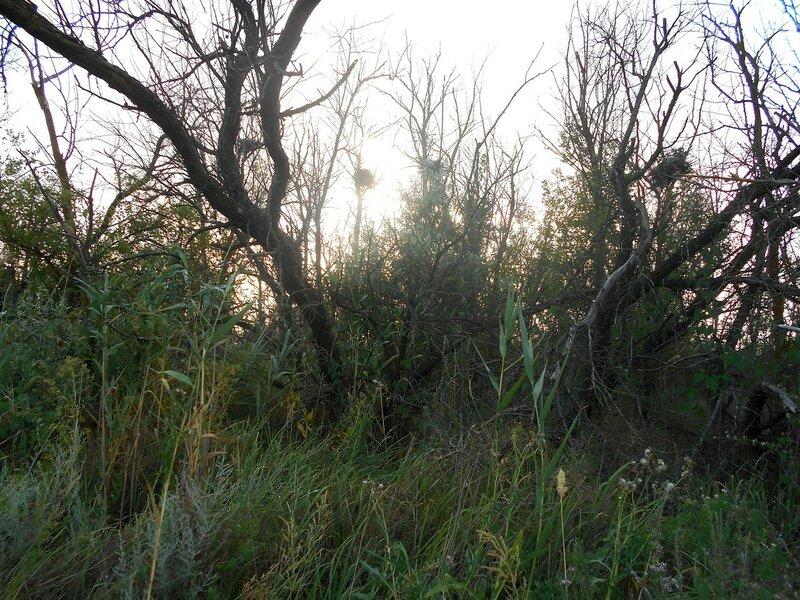 Вечер, в лесу ... DSCN7372.JPG