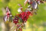 Когда яблони цветут....