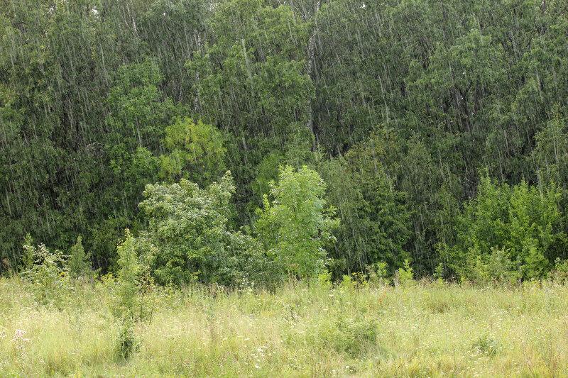 Дождь на перегоне Лужки-Орловские - Паньково. Быстро