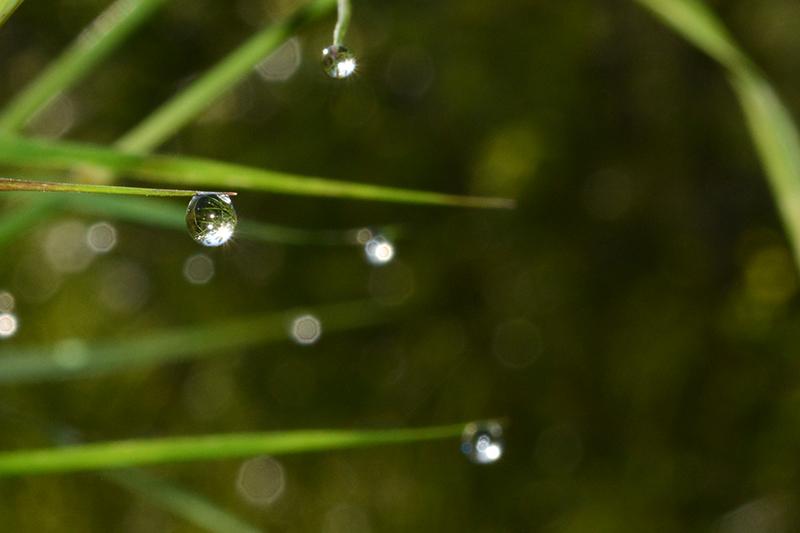 капли трава 3.jpg