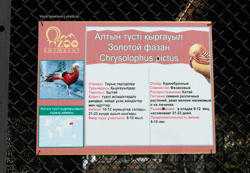 Табличка золотого фазана, зоопарк Шымкента