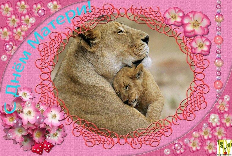 народную открытка с львятами судне