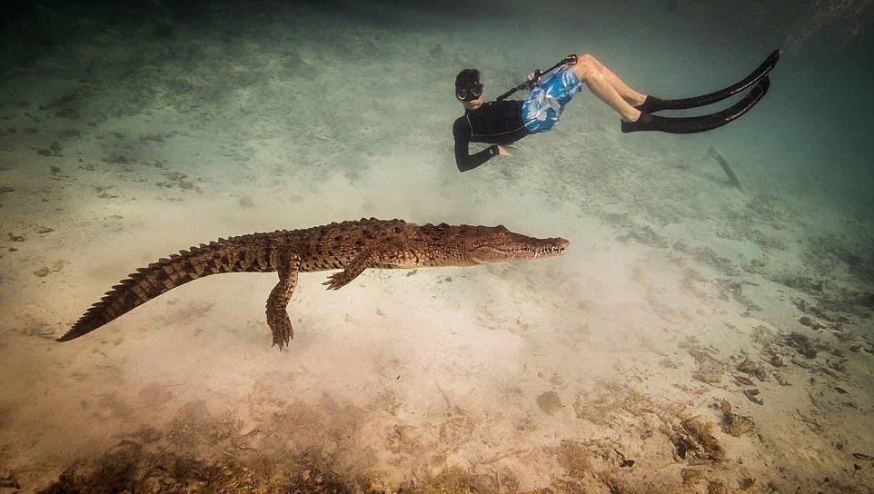 Подарок на 14-летие: плаванье с крокодилами