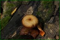 http://img-fotki.yandex.ru/get/139626/15842935.3bf/0_eee7a_2aa70dbd_orig.jpg