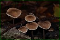 http://img-fotki.yandex.ru/get/139626/15842935.3c0/0_eee9c_ee281a94_orig.jpg
