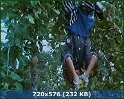 http//img-fotki.yandex.ru/get/139626/170664692.109/0_17d6f5_2def1e0_orig.png