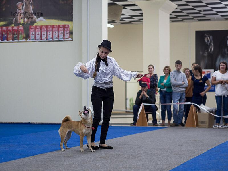 https://img-fotki.yandex.ru/get/139626/259726784.d5/0_20c330_2f6858ed_XL.jpg