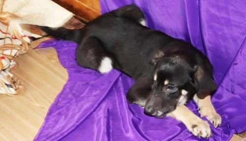 Джорджия собака из приюта догпорт