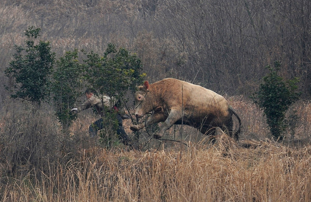 5. Это произошло совсем недавно, в июле 2016. Парк диких животных в Пекине. По версии СМИ, в ма