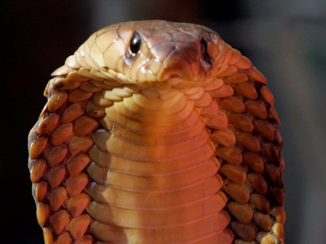Змеи — 100 тысяч смертей в год По состоянию на 2015 год, от укуса змеи умирают более 100 тысяч челов