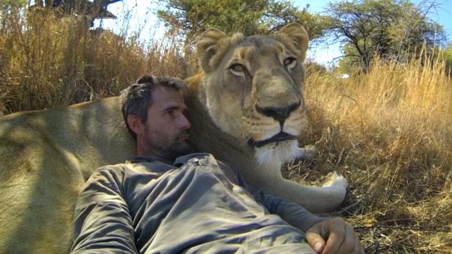 © lionwhisperer  Этот человек всю жизнь проработал схищниками иобщается сними без страха. П