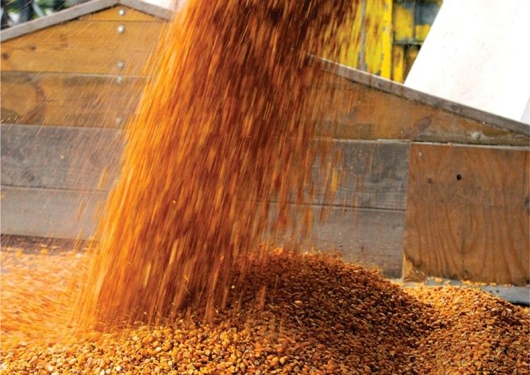 Украинские аграрии собрали практически 38 млн тонн зерновых