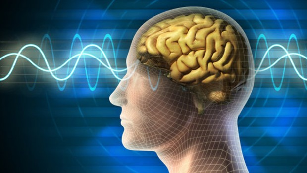 Человеческий мозг развивается до30 лет— Ученые